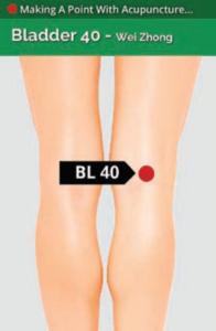 Bladder 40